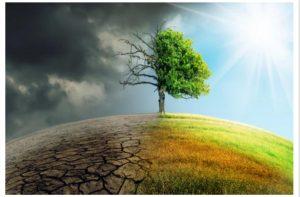 Meditação de 40 dias da greve mundial pelo clima